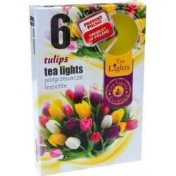 Čajové svíčky - Tulipán - 6 ks - Admit