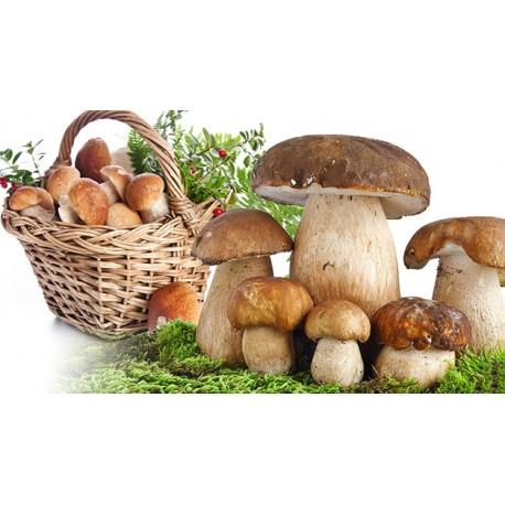 Sadba lesních hub - 1 balení