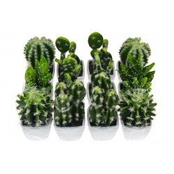 Dekorativní kaktus - 1 ks - 10-12 cm